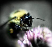 The Bumble Bee by Nazareth