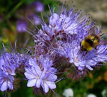 Being as busy as a bee can be by Sue Purveur