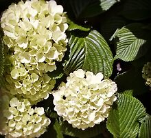 Viburnum by Linda  Makiej