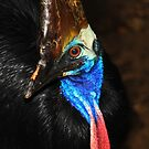Portrait of a Cassowary  - Cape Tribulation  FNQ  - Oz by john  Lenagan
