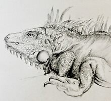 Lana the Iguana by ZoeMcCarthy