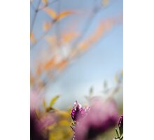 Tranquil lavender Photographic Print
