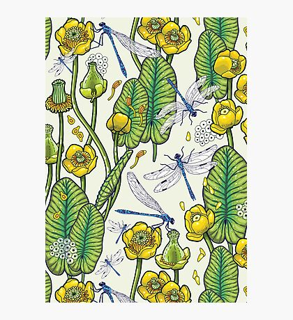 yellow water lilies and dragonflies Photographic Print