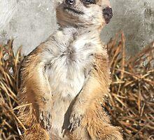 Chillin' Meerkat by Carol Vega