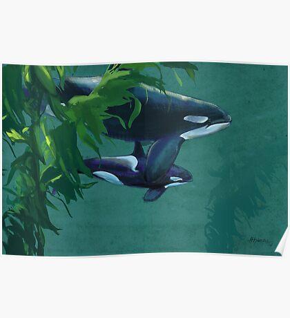 Killer Whale  Poster
