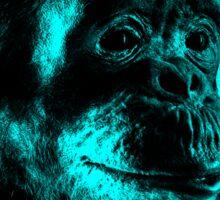 Chimp No 14 Sticker