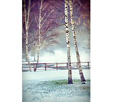 Two birches Photographic Print