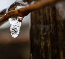 Small Icicle by Dustin Williams