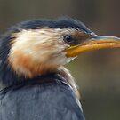 Portrait - A Little Black Cormorant by stevealder