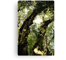 Ancient Rainforest Giants Canvas Print