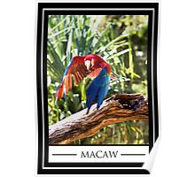 THE BEAUTIFUL MACAW Poster