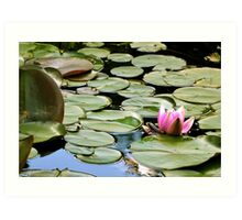Young frog on water lily flower Art Print