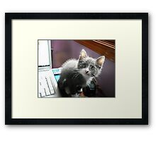 What?...I didn't do it Framed Print