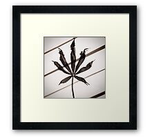 Soothing dry  Framed Print