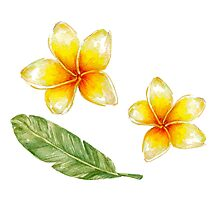 Plumeria flowers and banana leaf Photographic Print