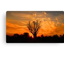 Tranquil Sunset Boab - Panorama Canvas Print