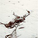 Strands by Alan Robert Cooke