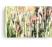 Grass Reeds Close Up Canvas Print