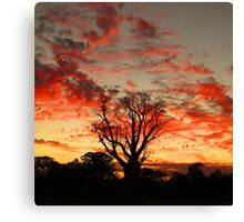 Single Boab Red Clouds Canvas Print