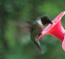 Hummingbird by mmoeus