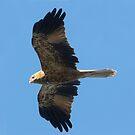Winging It by byronbackyard