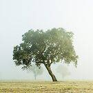 Near Mansfield there leans a tree. by Neville Jones
