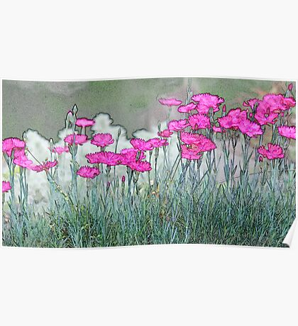 Lined Carnations Poster