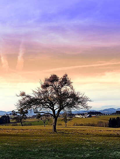 Old tree and amazing cloudy sky   landscape photography by Patrick Jobst