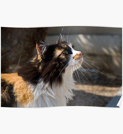 Baska Cat Poster