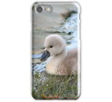 A pair of cygnets iPhone Case/Skin