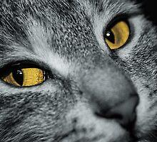 Yellow Eyed Demon by LaniPix