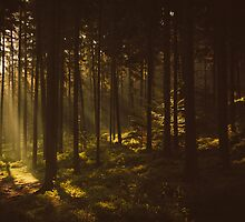 Morning forest by Hudolin