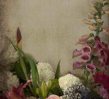 Flowers - Bloom  by Kim-maree Clark