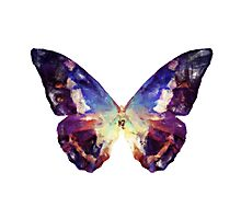 Colorful Painted Butterfly Photographic Print