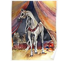 Arabian Horse In The Tent Poster