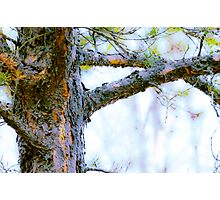 Forest Beauty Photographic Print