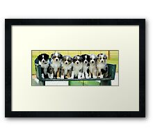 Australian Shepherd Puppies Watercolor Framed Print