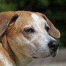 Dog by Karl R. Martin