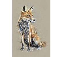 Out-foxed Photographic Print