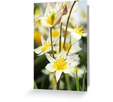 White and Yellow Blooms Greeting Card
