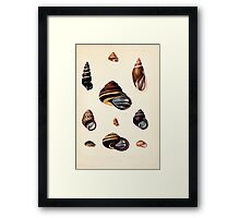 Proceedings of the Zoological Society of London 1848 - 1860 V5 Mollusca 031 Framed Print