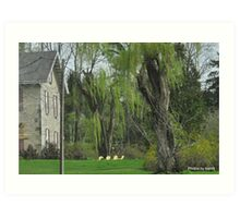 Yellow Chairs and Willow Art Print