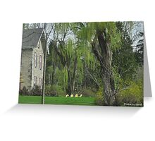 Yellow Chairs and Willow Greeting Card