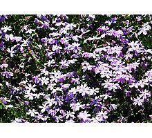 Lavender Layer Photographic Print