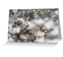 Birds in the Snow Greeting Card