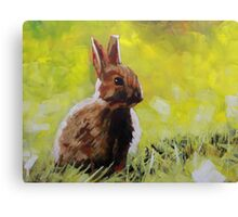 Baby Bunny Rabbit Painting : Print for Sale Canvas Print