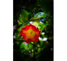 Trumpeting Beauty Photographic Print