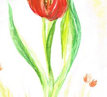 red tulip by Teresa White
