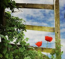 Over the Garden Gate by Christine Lake