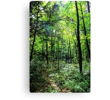 Sun shining though trees Canvas Print